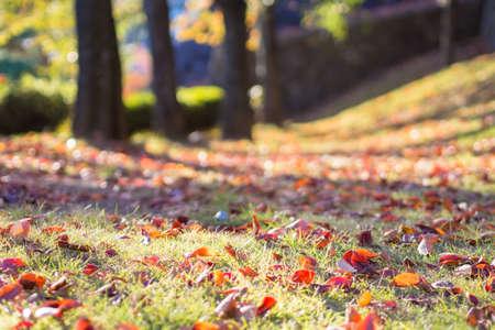 dode bladeren: Autumn gazon en dode bladeren Stockfoto