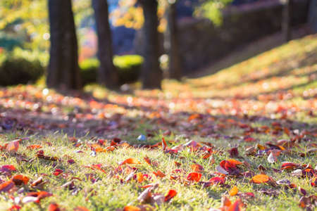 dead leaves: Autumn lawn and dead leaves Stock Photo