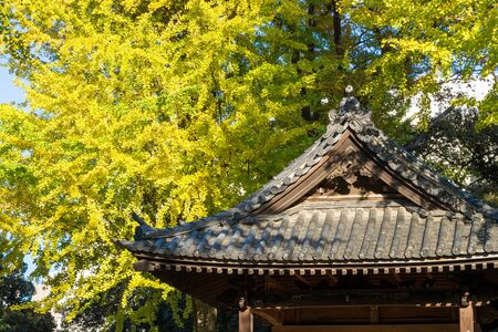 buddhist temple roof: Roof of the Japanese house and ginkgo