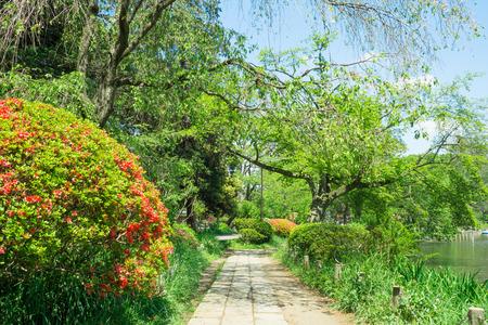 promenade: Promenade of the Zenpukuji park