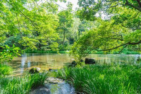 designated: Nationally designated natural monument area in Rakujuen Park, Mishima Japan