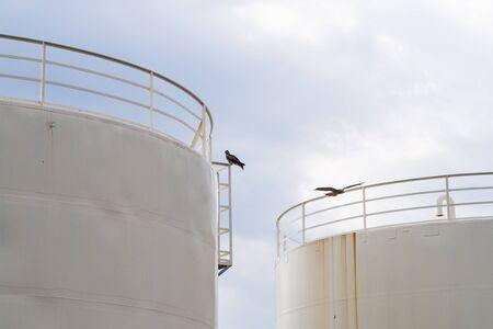 cisterna: Cisterna y el milano negro que se mantiene