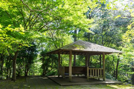 Arbor forest of the Surugadaira nature park, Shizuoka Japan Stock Photo