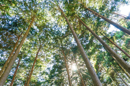 Forêt de cyprès Banque d'images
