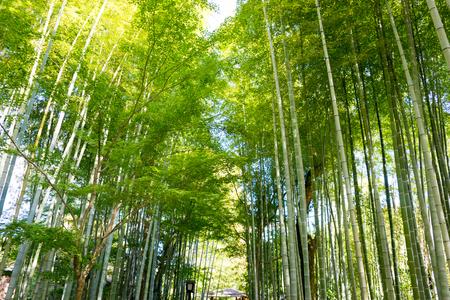 no pase: Chikurin no Komichi (Bosque de bamb� Pass) Foto de archivo