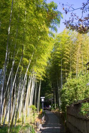 no pase: Chikurin no Komichi (Bamboo Forest Pass) Foto de archivo