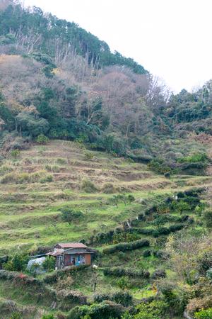 terraced: Terraced fields of Izunokuni-shi