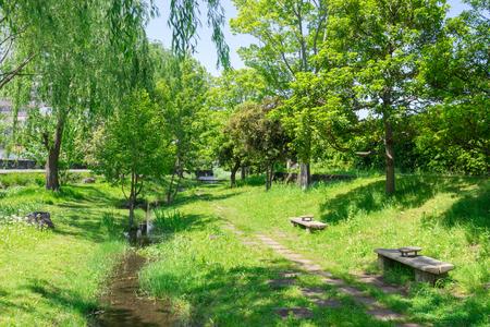 riverside tree: Walk road of the Genpei River