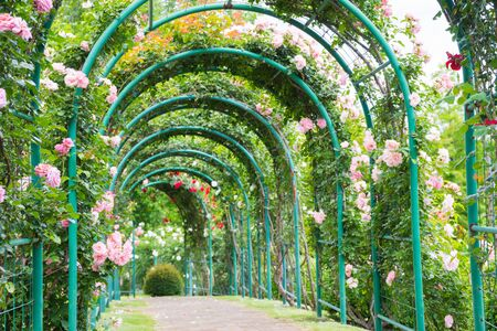 Arch of the rose