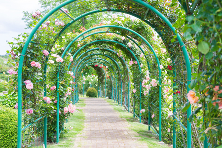 バラのアーチ 写真素材