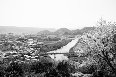 in full bloom: Tokura Bridge and cherry tree