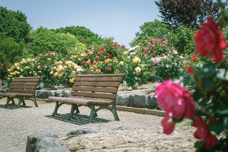 Scenery with bench / Fuji City Central Park