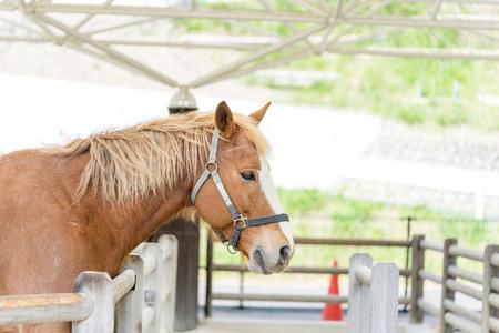 Shetland pony's profile