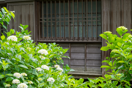 Japanese houses and hydrangeas