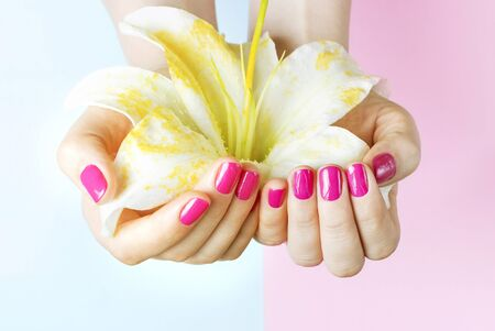 Female hands with pink manicure holding a flower on blue background, close up