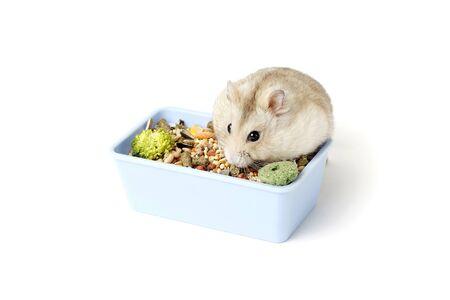Dwarf furry hamster eats food next to the feeder on white background Stockfoto