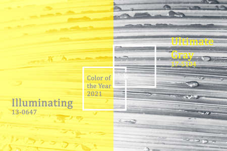 Trendy colors of the year 2021 Illuminating and Ultimate gray.
