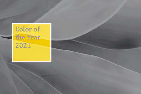 Tropical leaves trendy yellow and gray, concept of color 2021