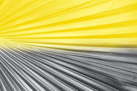 Palm leaf gray and yellow, concept color of year 2021.