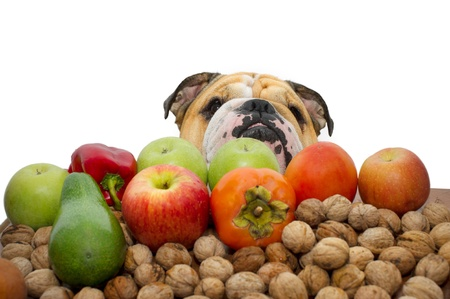 Autumn fruits nuts and vegetables with a bulldog the background isolated