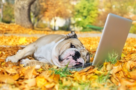 Dog with a computer in autumn leaves photo