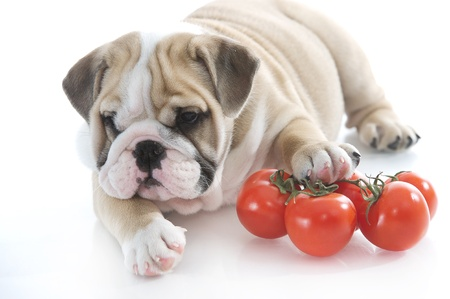 Beautiful english bulldog puppy with vegetables Stock Photo