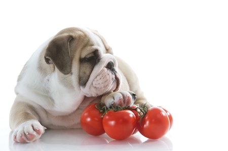 Beautiful english bulldog puppy with vegetables Stock Photo - 13324223