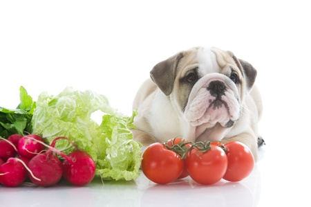 Beautiful english bulldog puppy with vegetables Stock Photo - 13324224