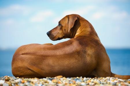 Beautiful dog at the beach