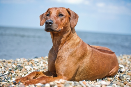 Beautiful dog resting at the beach shore photo