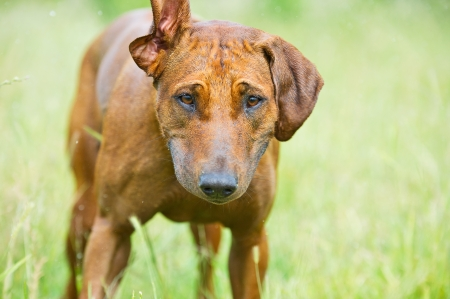 Portrait of a funny cute dog with ears up Stock Photo