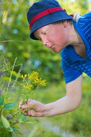 herbolaria: Mujer herbolario recoger plantas medicinales Foto de archivo