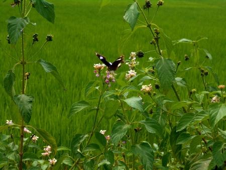 꽃에서 꿀을 빠는 나비 스톡 콘텐츠