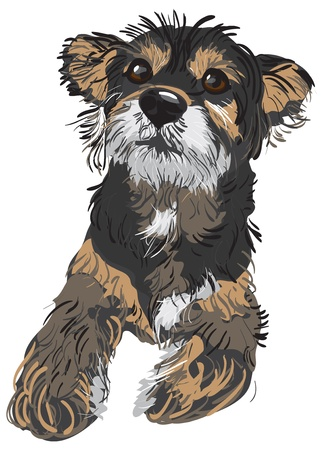 cartoon dog: Vector Illustration of a dog