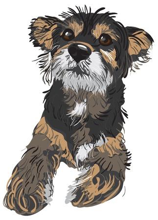 breeds: Vector Illustration of a dog