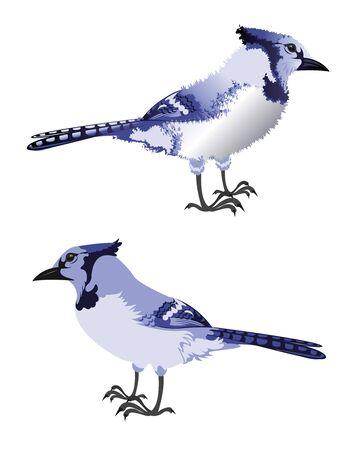 ornithology: Profile of a Bluejay Illustration
