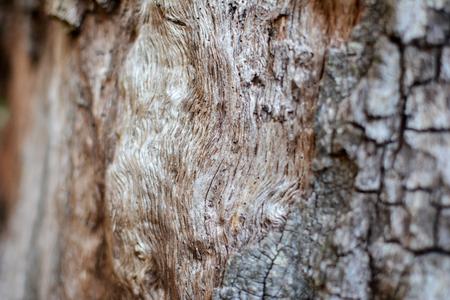 Rotten driftwood Stock Photo