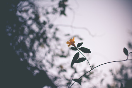 Yellow flower background Stock Photo