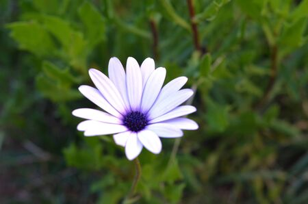 arise: Flower