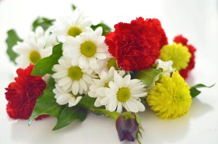 daises: Flowers Stock Photo
