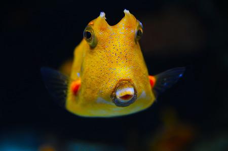 boxfish: A boxfish