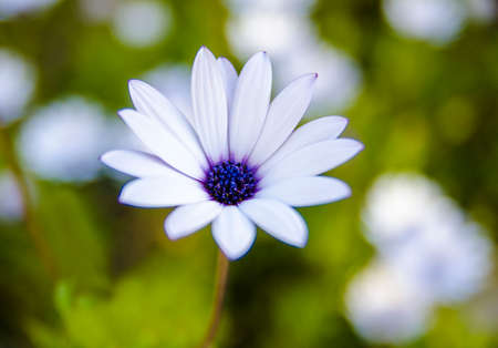 arise: daisy that yellow and white color Stock Photo