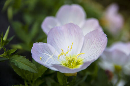 arise: White flowers Stock Photo