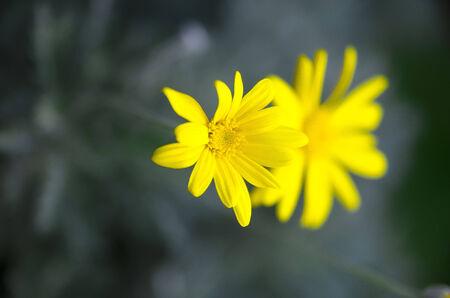 arise: Yellow flowers