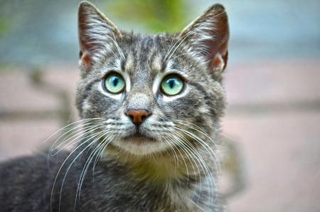 eyes green: Gato tiene los ojos verdes