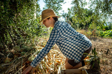 Young woman in straw hat and plaid shirt kneeling picking onions in the shade of a tree