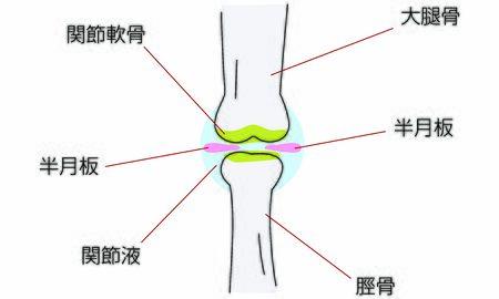 Illustrated illustration around the knee joint Illustration