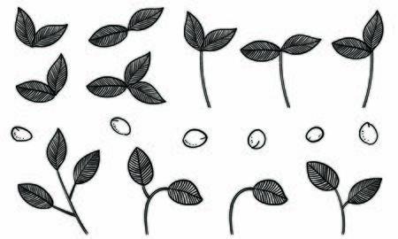 Botanical illustrations: leaves, veins, fruits
