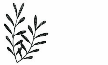 Botanical illustrations: headline decoration: leaves, veins, fruitless