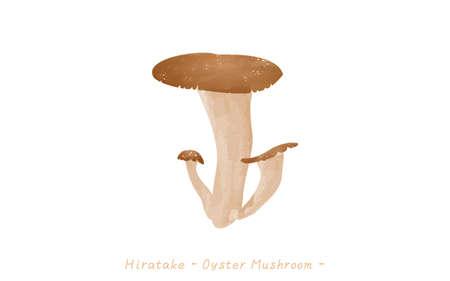Autumn taste, simple illustration of mushroom oyster mushroomVector illustration